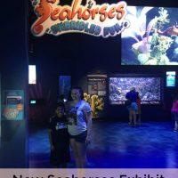 Visit the Seahorses Exhibit at Newport Aquarium