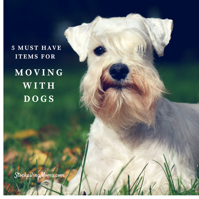 5 Must Have Items For Moving With Dogs
