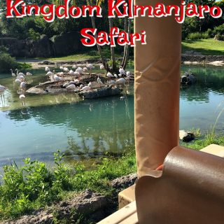 WDW Animal Kingdom Kilimanjaro Safari