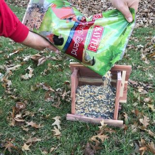 Save Big with a $2 Kaytee Coupon and Basic Tips to Attract Birds to the Backyard