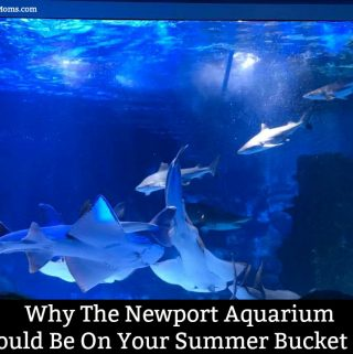 Why The Newport Aquarium Should Be On Your Summer Bucket List